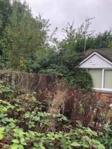 Photos showing the overgrown site